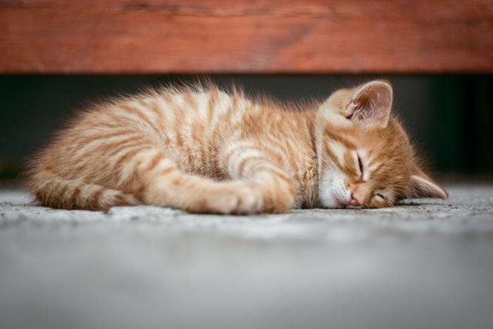無添加キャットフードランキング!安全で安心の猫の餌はどれ?