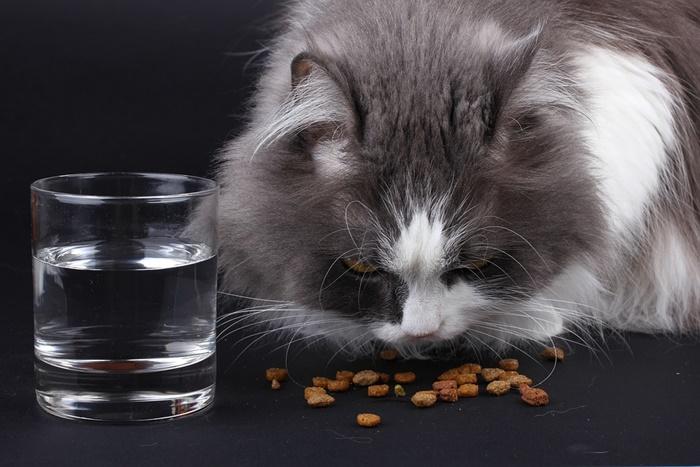 子猫におすすめのキャットフードランキング!餌の選び方と与え方
