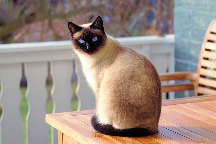 【老猫の餌】高齢なシニア猫におすすめのキャットフード人気ランキング