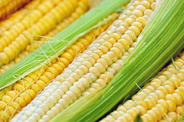 グレインフリーとは?高評判の穀物不使用キャットフードおすすめランキング