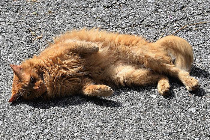 猫のマーキングの意味とは?厄介なスプレー(おしっこ)の原因と対策方法まとめ