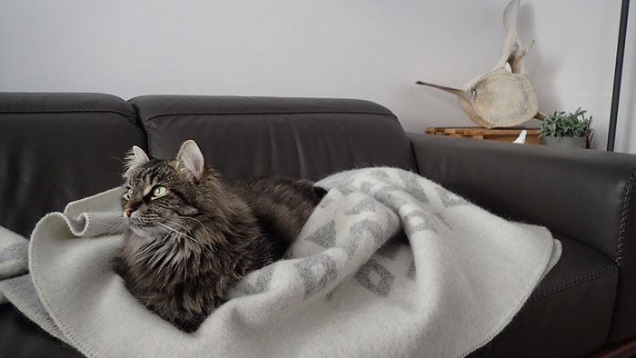 初めて猫を飼う時って何が必要?便利なおすすめアイテム一覧まとめ