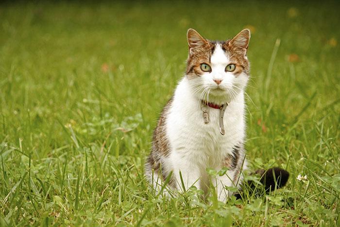 猫の便秘解消におすすめのサプリランキング!原因と解消法とサプリの選び方
