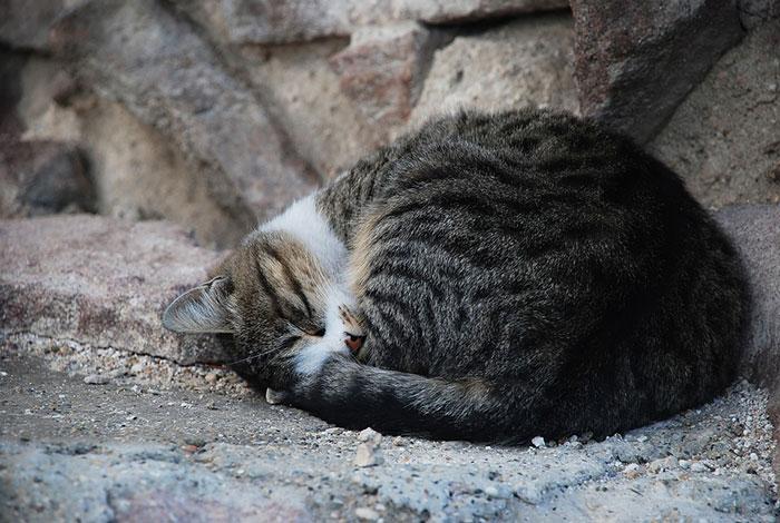 猫の仕草には意味・理由がある?行動でわかる気持ち仕草の一覧