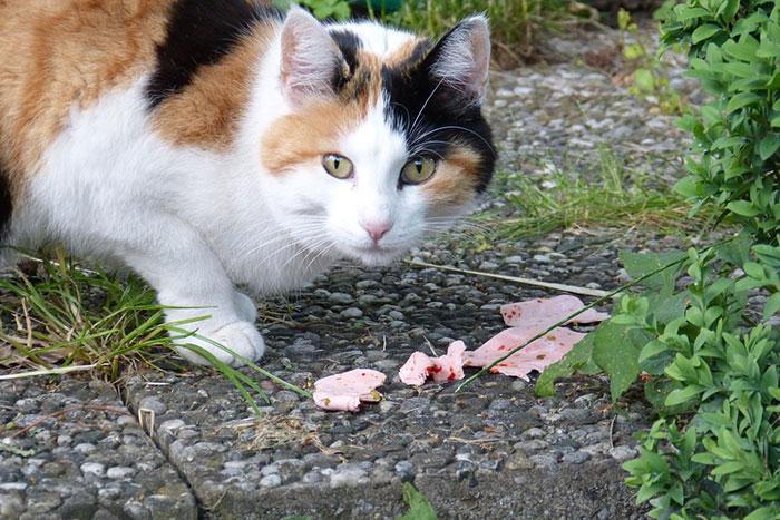 【安全で健康的】猫のおやつおすすめ人気ランキング!おやつの種類や正しい与え方