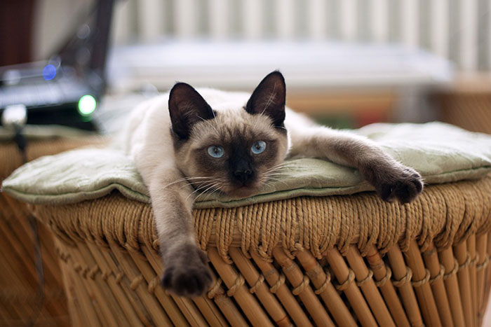 猫は自分が可愛いと自覚している?可愛すぎるあざとい萌えポーズはわざとなのか