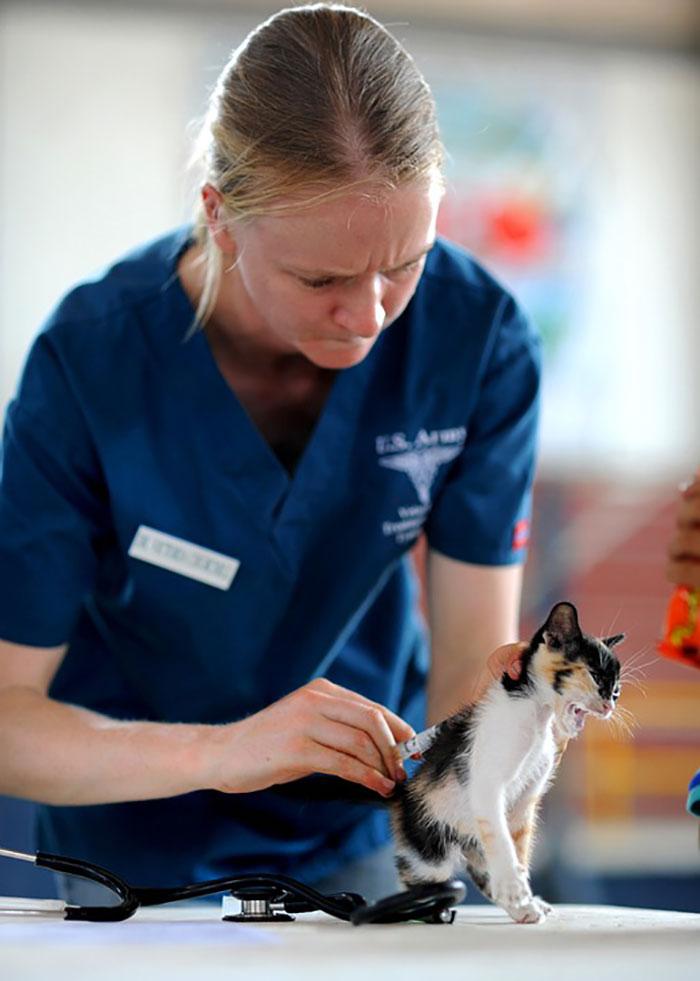 猫の尿路結石の症状と原因まとめ!治療法とフード選びはどうすべき?