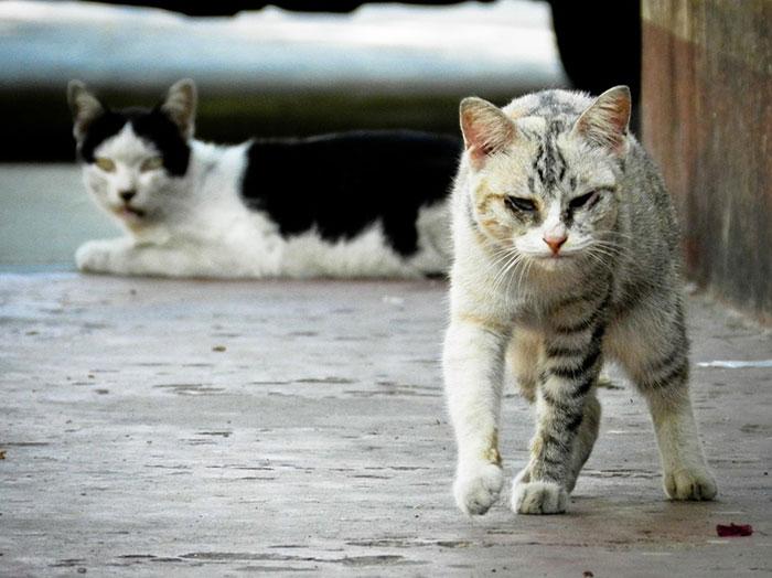 野良猫を保護したらどうすればいい?保護の仕方と飼えない場合の対処法