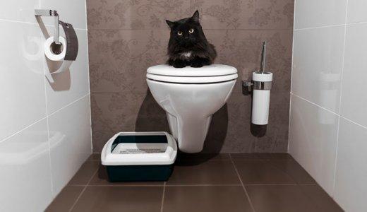 便秘の猫におすすめのキャットフード人気ランキング!うんちが出ない時の解消法
