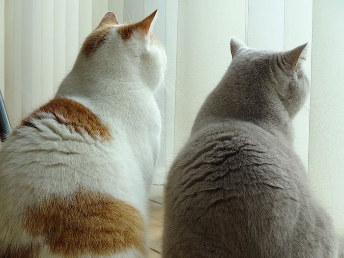 猫の毛艶が良くなるキャットフードおすすめ人気ランキング!被毛をツヤツヤにする方法