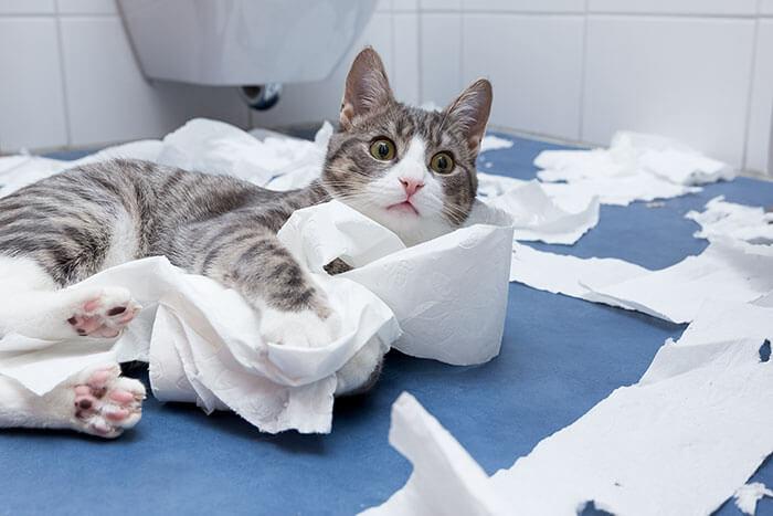 猫の下痢におすすめのキャットフードランキング!下痢の原因と正しい対策