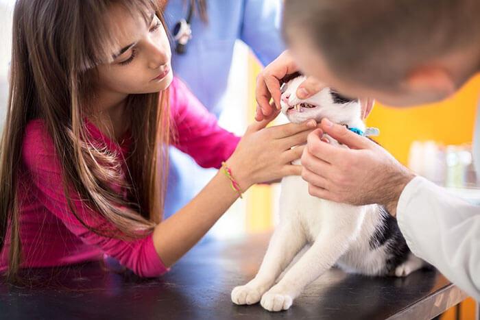 猫は虫歯にならない!?でも気をつけておきたい歯周病の原因と対策