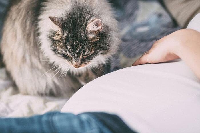 猫の抜け毛におすすめなキャットフードランキング!抜け毛の原因と対策を徹底解説