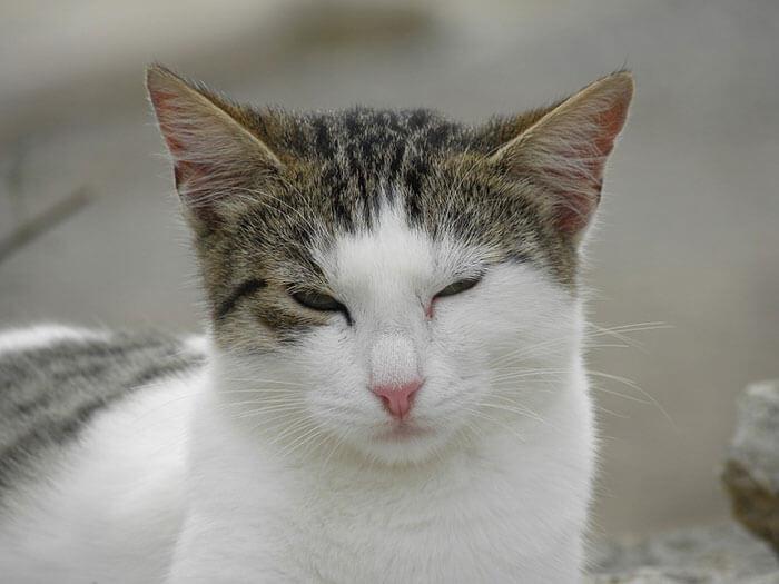 猫の涙やけ改善におすすめの無添加キャットフードランキング!猫の餌で対策