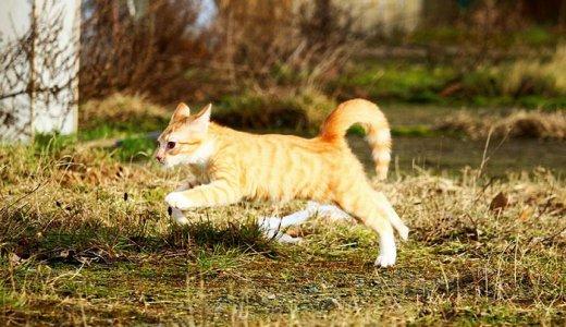 猫用関節サプリおすすめ比較ランキング!関節炎にはグルコサミンが効果的
