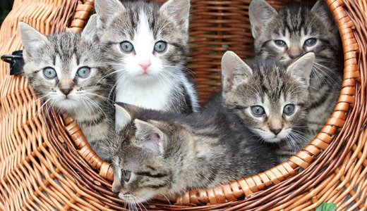 猫がなりやすい病気一覧!病気の予防と対処法