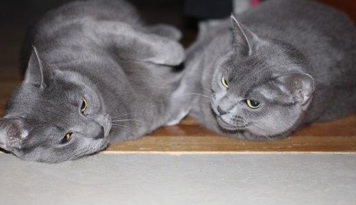 国産無添加キャットフードおすすめ人気ランキング!日本産の猫の餌の選び方
