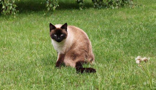 猫の下痢におすすめのサプリランキング!原因と対処法とサプリの選び方