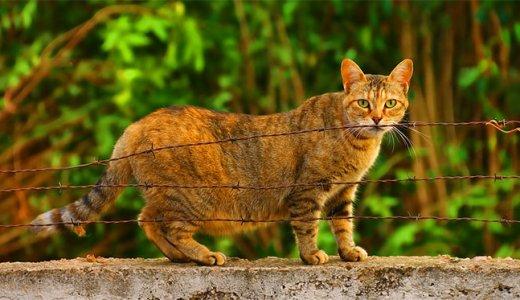 猫の去勢&避妊手術の費用・時期・方法って?術後のケアと助成制度について