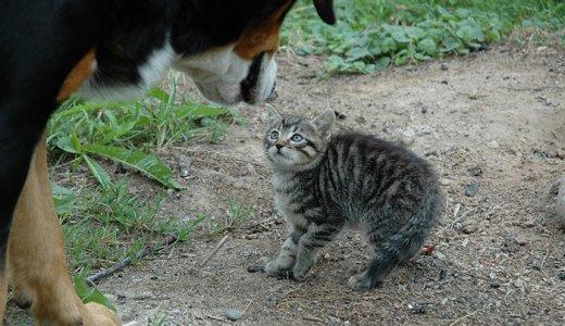 猫の体臭・口臭を消すキャットフードおすすめランキング!猫のニオイの原因と対策