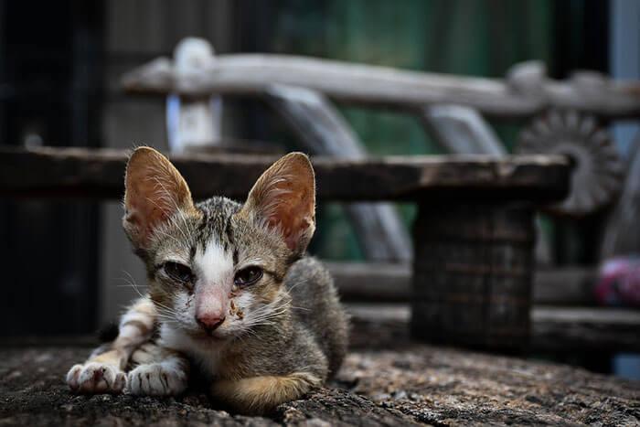 痩せ過ぎの愛猫におすすめ高カロリー猫キャットフードランキング!健康的に太る方法