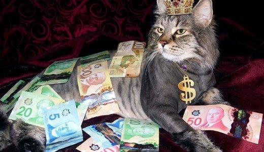 超高級なキャットフードで安全なものはどれ?高品質で高価格な猫の餌比較