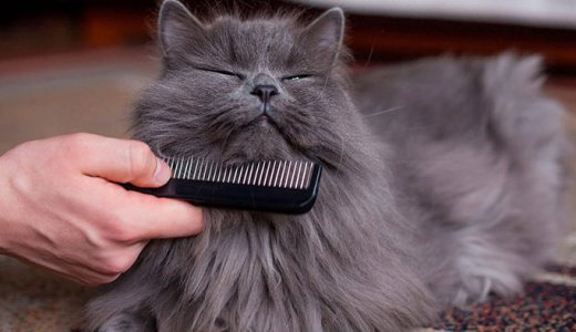 猫の毛が抜ける時期は春と秋!抜け毛の原因と換毛期対策
