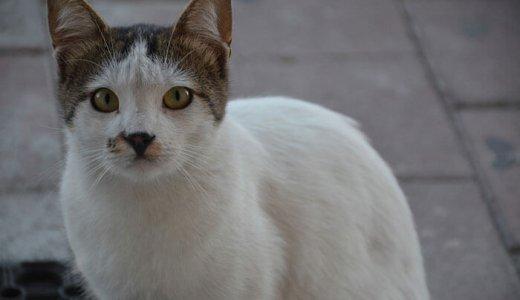 猫の乾燥肌対策と保湿ケア!保湿剤を上手に使ってフケ・肉球ひび割れ対策をしよう