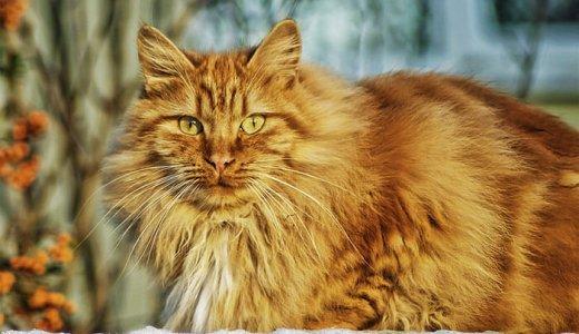 長毛猫にはファーミネーターがおすすめ!犬の抜け毛にも!口コミと使い方を解説