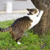猫がソファで爪とぎするときの対処法!猫用おすすめソファも