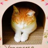 猫の爪とぎは100均の材料で自作できる!ダンボールや麻布を用意